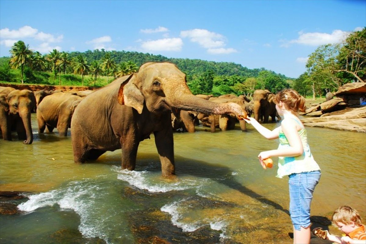 Pinnawala elephant orphanage (1)