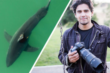 Carlos The Malibu Artist Great White Sharks