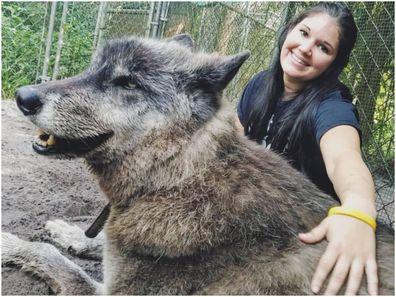 Wolfdog Yuki