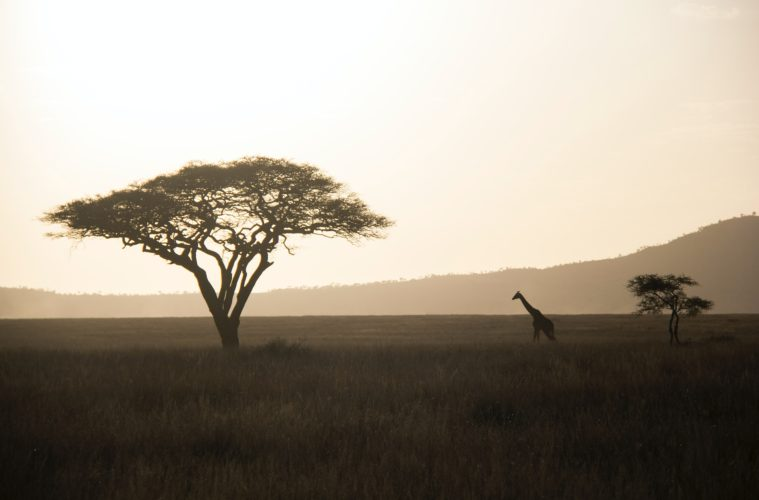 Serengeti Africa Safari