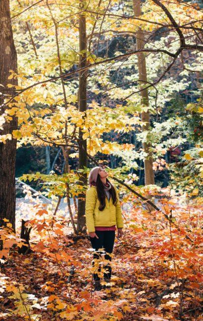 wye valley autumn forest dean