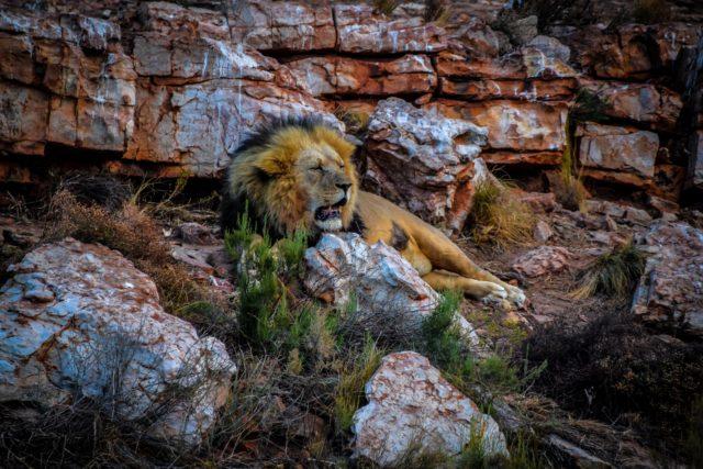 Cape Town safari